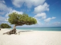 Aruba Traumstrände