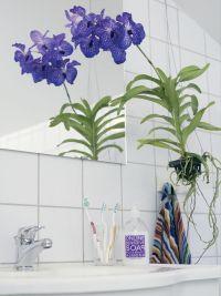 so bl hen orchideen trendblog. Black Bedroom Furniture Sets. Home Design Ideas