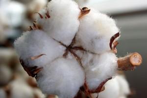 Nachhaltig Bio-Baumwolle