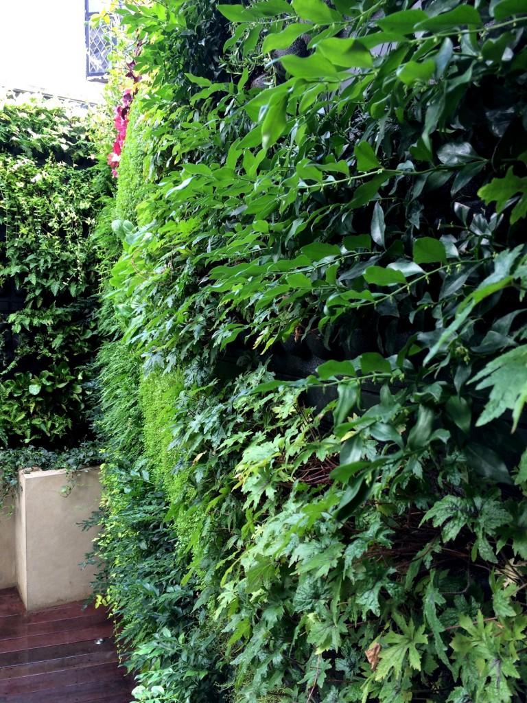Grüne Wand