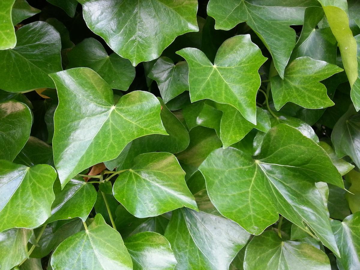 Bunter Sichtschutz Kletterpflanzen Fur Balkon Und Garten Trendblog