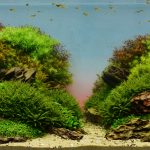 Aquascaping: Kreative Unterwassergärtnern hinter Glas