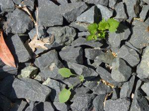 Kies Schotter Vorgarten
