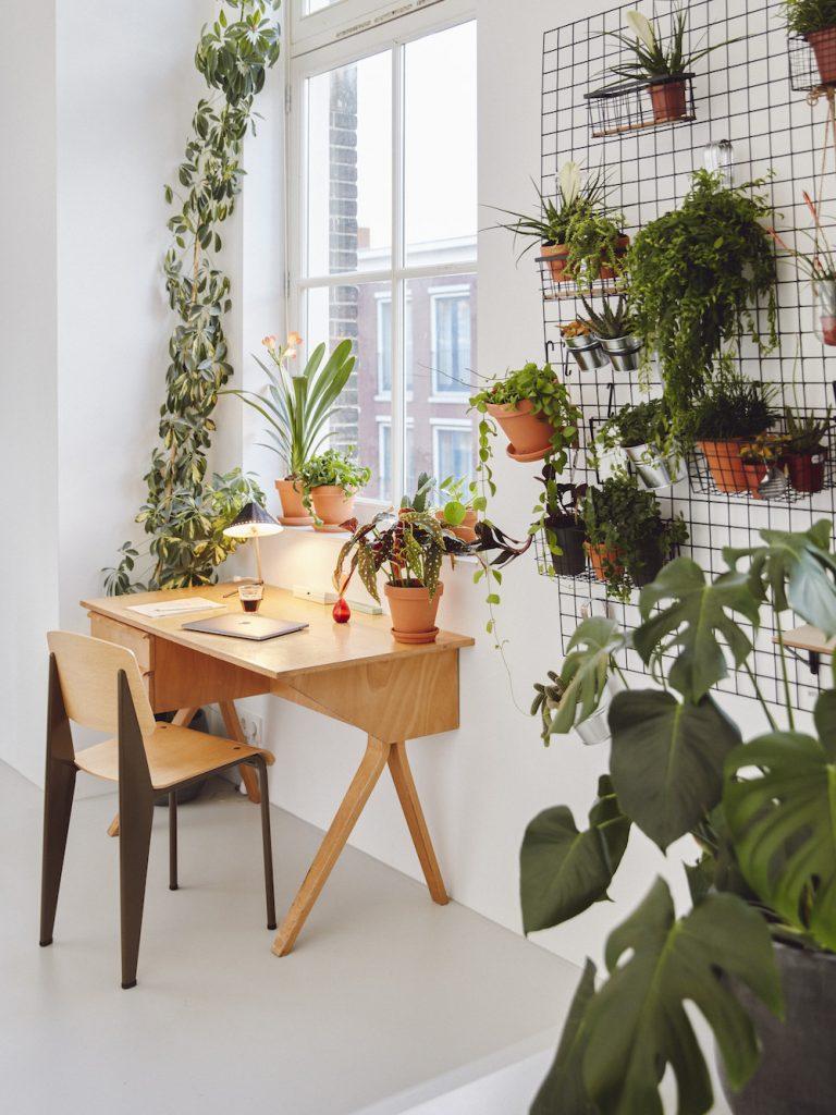 Pflanzen Home Office